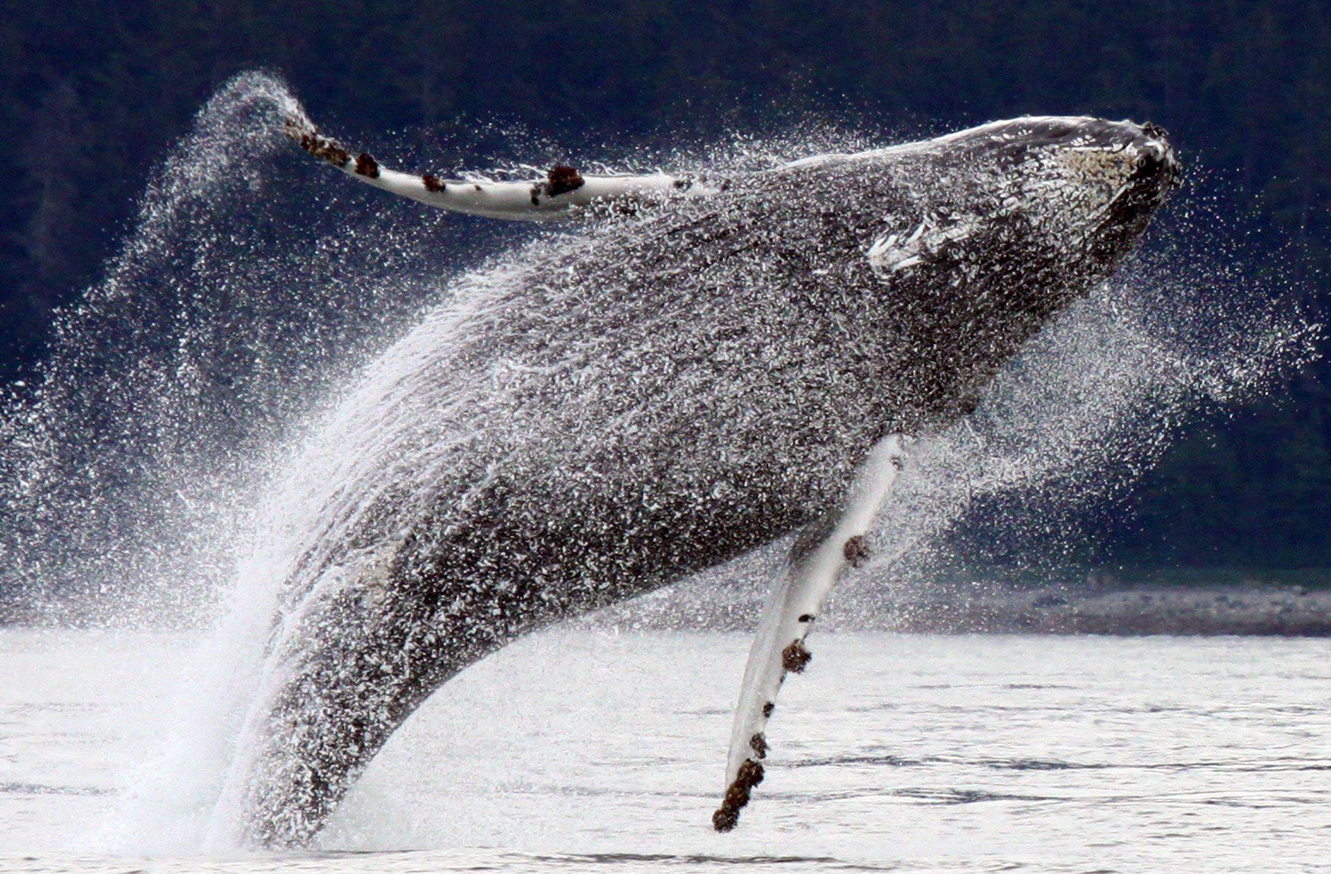 Fürdő bálna