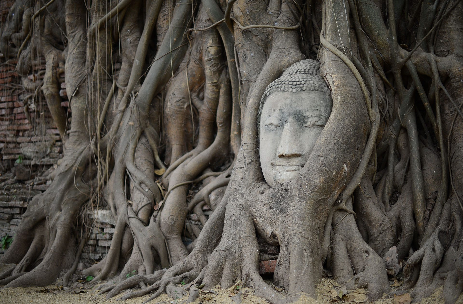 Fákkal körülölelt Buddha szobor